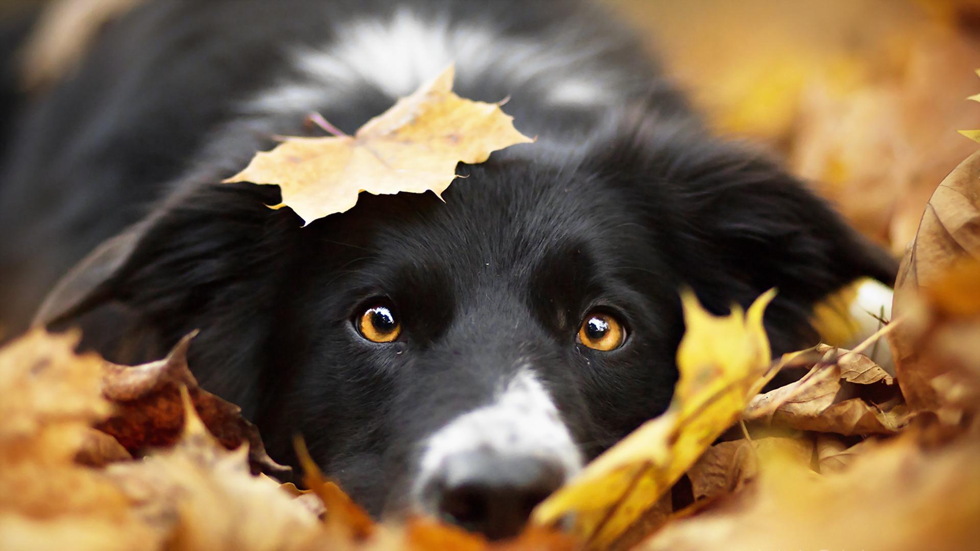 Starostlivosť o psa v jeseni